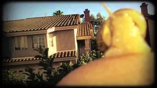 Tears in Heaven- Eric Clapton (Snail Memorial)