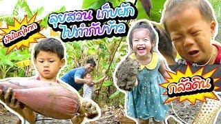 กุมารรายงาน EP14 | ลุยสวน เก็บผัก ไปทำกับข้าว
