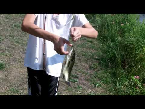 Fishing at new pond. (bass, and a MONSTER sunfish)