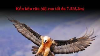 Thế giới động vật - Top 10 loài chim bay cao nhất thế giới