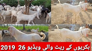 370 | RAJAN PORI KI KHORAAK | GOAT FARMING PAKISTAN - BAKRA