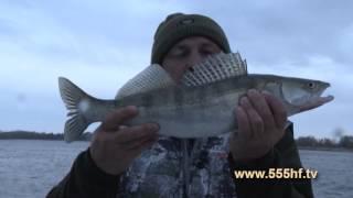 Астрахань рыбалка у михалыча