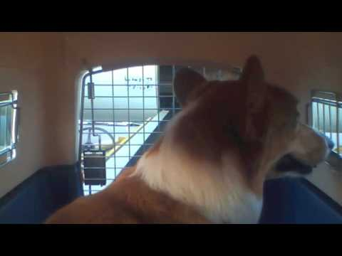 Is American Airlines Pet Cargo Reliable Yahoo Answers
