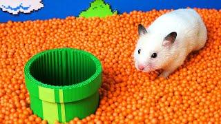 🐹 Hamster escapes the Super Mario maze in real life