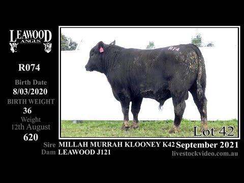 LEAWOOD KLOONEY R074 (AI)