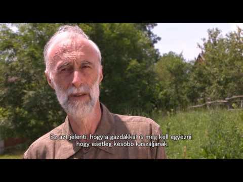 A Giardia paraziták kezelése népi gyógymódokkal