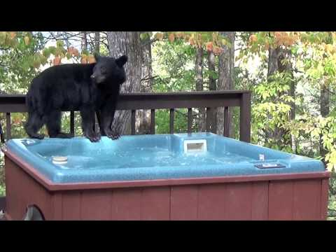 Bear Discovers the Wonders of a Hot Tub