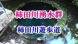 静岡観光スポット柿田川湧水群柿田川遊歩道を散策