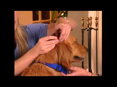 "Veterinary Acupuncture Episode featuring Dr. Jenna Castner Hauck, ""Animal Attractions TV"""