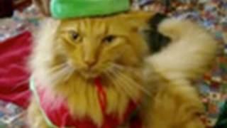 "Animals of YouTube sing ""Jingle Bells"""