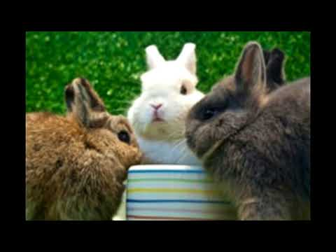 , title : 'Life Expectancy of the Docile Dwarf Rabbit