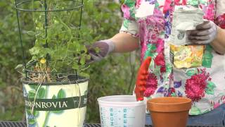 How to Fertilize Tomato Plants With Coffee Grounds : Garden Space
