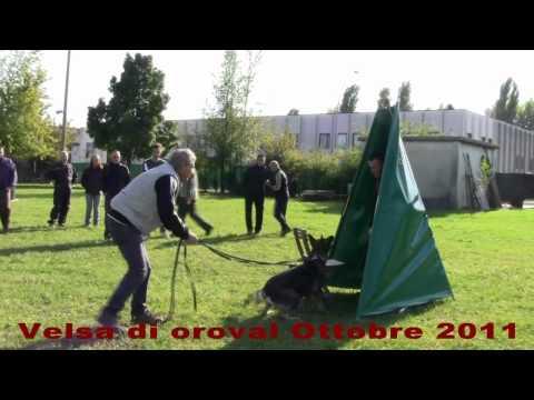 immagine di anteprima del video: Velsa di Oroval Ottobre 2011