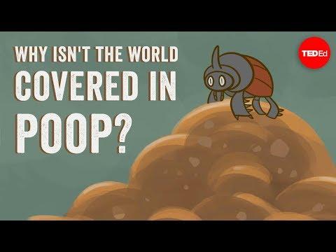 Proč není svět pokrytý trusem?