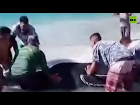 Stranger on the Shore | Locals rescue baby humpback whale beached in Brazil