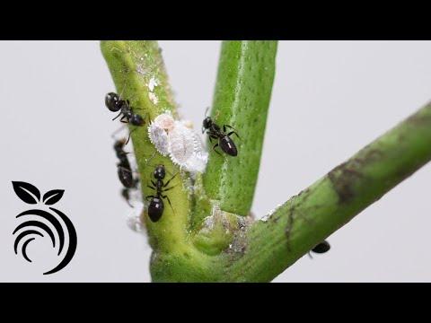Hogyan lehet örökre elpusztítani a parazitákat