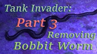 Bobbit Worm Removal.. Tank invader (part 3)