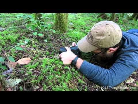 A Quick Review of the VENUS V-DX 60mm f/2.8 2:1 Ultra-Macro Lens