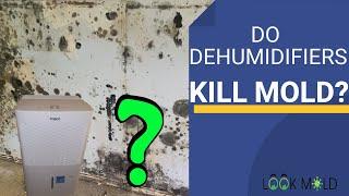 Do Dehumidifiers Kill Mold??