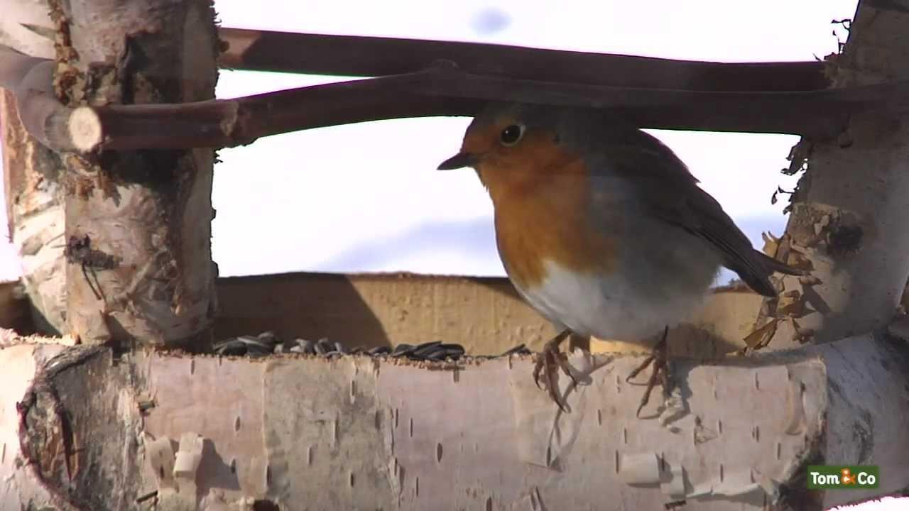 Preambule - la vie animale dans votre jardin