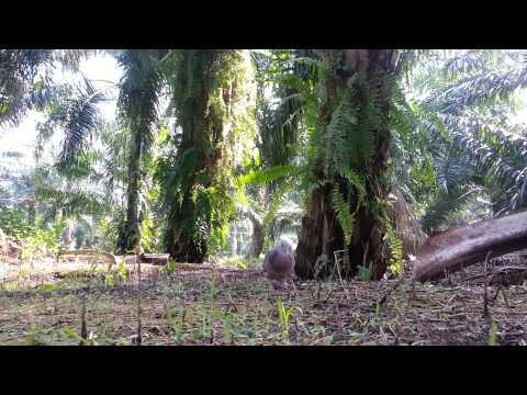 Tan Khin Boon YouTube videos - Vidpler com