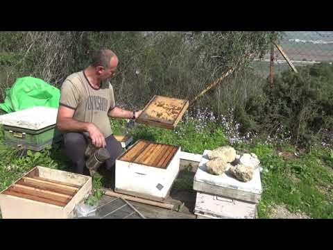 24 февраля ставлю вторые корпуса для мёда