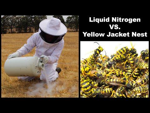 Killing Hornets with Liquid Nitrogen