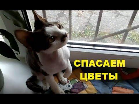 ✅ Как защитить комнатные растения от кошек / Лайфхак