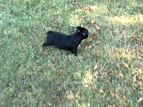 Harley enjoying playing outside