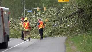 Coquitlam Large Tree Fell Across Lougheed Hwy Blocking Traffic April 21 2015 Sony 4K
