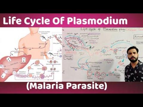 Mik a paraziták a keszegben