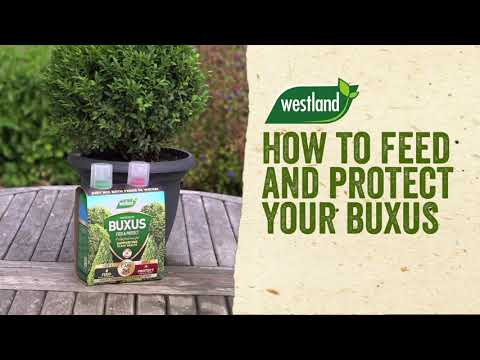 2 in 1 feed and protect buxus Video