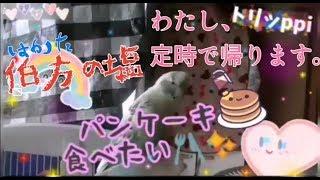 mqdefault - 『 パンケーキ食べたい ! 』( 夢屋まさる さん) セキセイインコ ☆ トリッppi 今お気に入り(^◇^)♪(^◇^)❤