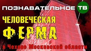 Заметки: Человеческая ферма в Чехове (Познавательное ТВ, Артём Войтенков)