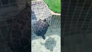 Video del alojamiento Casa El Patas