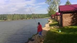 Рыбалка на риге. золотой сазан