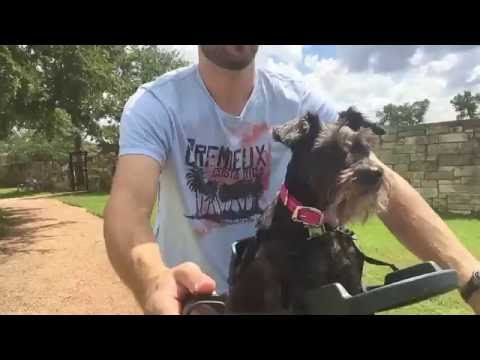 Buddyrider™ Dog Bicycle Seat Overview And Review - Top Tested Dog Bike Carrier