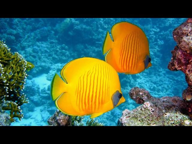 Beautiful Fish Wallpaper || Beautiful Tropical Fish Wallpaper