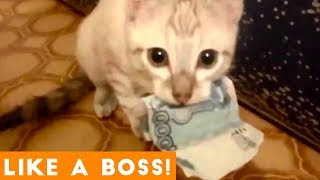 Like a Boss Ultimate Smart Animal Compilation | Funny Pet Videos!