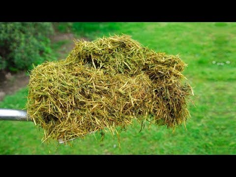 You Will Never Throw Away Grass Clippings After Watching This