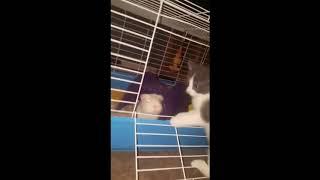 Забавный кот радует взгляд | Приколы до слез - Collab #135