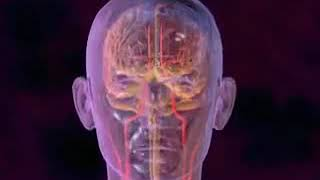migraine definition symptomes causes remedes naturels