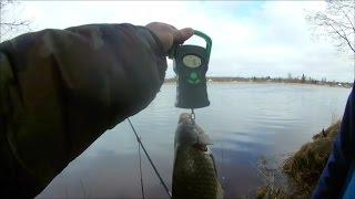Рыбалка в УСТЬ-ЛУГЕ. БИТВА за ОРДЕН ЧАСТЬ 2.