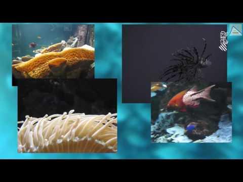 Innovador procedimiento para el cultivo conjunto de especies marinas (English subtitles)