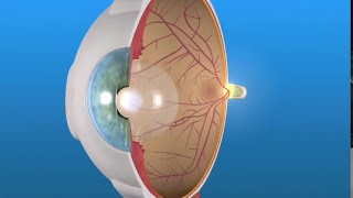 Eyedrops for Age-Related Macular Degeneration?
