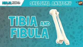 Tibia & Fibula Anatomy