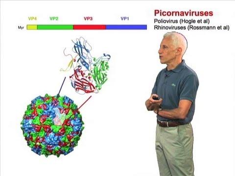 Humán papillomavírus hpv vagy genitális szemölcsök