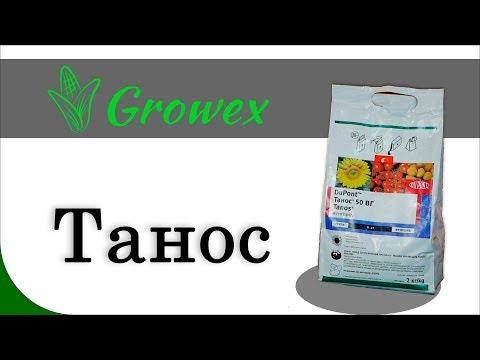 ТАНОС - стандарт защиты подсолнечника