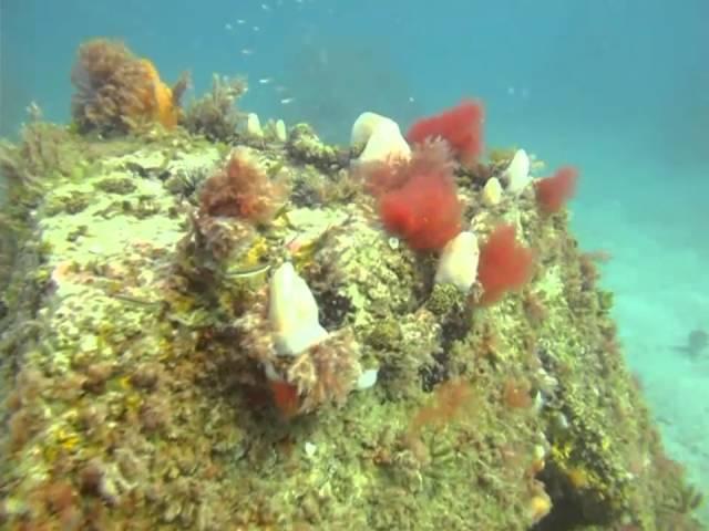 Scuba Diving Veteran's Reef - Clearwater Florida