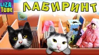 Смешные коты 2017 Новогодний Лабиринт для кошек Два КОТА Коржик и Компот проходят ЛАБИРИНТ